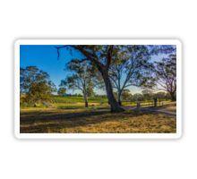 Bullock Creek Vineyard at Sunset Sticker