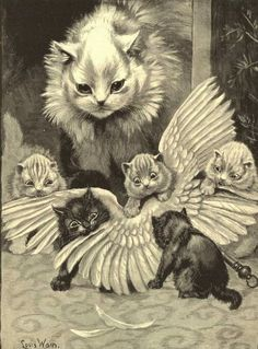 Someone from Alberta is cheating cat lovers by selling them shaved kittens. These shaved kittens were sold in the market as the hairless Sphynx cats. Chat Sphynx, Sphynx Cat, Louis Wain Cats, Bird Hunter, Son Chat, Art Et Illustration, Cat Illustrations, Cat Drawing, Cat Art