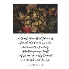 """Wilted Flowers"" by Araceli M. Wilted Flowers, How To Dry Basil, Decay, Poetry, March, Journey, Herbs, Food, Herb"