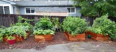savvyhousekeeping lessons learned 2013  vegetable Garden