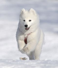 10 DOG BREEDS BUILT FOR SNOW.