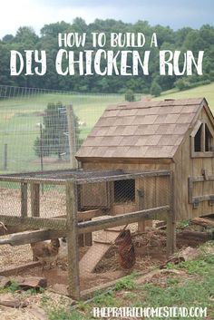 Building A DIY Chicken Coop If you've never had a flock of chickens and are considering it, then you might actually enjoy the process. It can be a lot of fun to raise chickens but good planning ahead of building your chicken coop w Portable Chicken Coop, Best Chicken Coop, Chicken Coop Plans, Chicken Runs, Chicken Coops, Chicken Houses, Chicken Tractors, City Chicken, Chicken Life