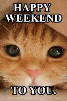 Funny & Happy Weekend Quotes With Images, Pictures - - Happy Weekend Quotes and Images will let us forget all the bad things that happened to us for this week and enjoy a great weekend. Saturday Memes, Happy Saturday Quotes, Happy Weekend Images, Good Day Quotes, Its Friday Quotes, Good Morning Quotes, Happy Quotes, Happy Sunday, Happy Images