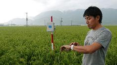 ITを武器に15品種ものコメを自在に操るマジシャンのような農家が熊本県にいる。阿蘇で約5000アールもの大規模水田を作付ける内田農場の内田智也代表取締役その人だ。左手に常に巻くのは腕時計型端末「アップルウオッチ」。