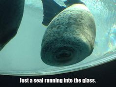 Funny Pictures Of The Day – 77 Pics! Is that really a seal?