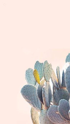 Good Screen Cactus Flower desert Style Cacti and also succulents are plants that will We've always loved in addition to being all of our waters ap Ed Wallpaper, Screen Wallpaper, Minimal Wallpaper, Travel Wallpaper, Cacti And Succulents, Cactus Plants, Succulent Planters, Succulent Arrangements, Foliage Plants