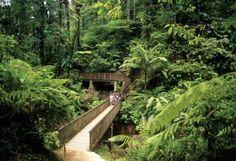 Rain forest - Guadeloupe