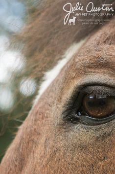 83 Horse Photography Ideas Horse Photography Austin Photography Photography