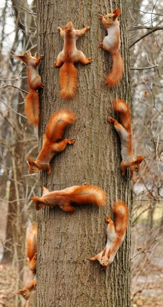There's room for all these cute squirrels on one amazing tree! :)
