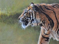 Tiger Painting - Tiger Portrait by Alan M Hunt Wildlife Paintings, Wildlife Art, Animal Paintings, Big Cats Art, Cat Art, Amazing Paintings, Original Paintings, Rusty Spotted Cat, Sand Cat