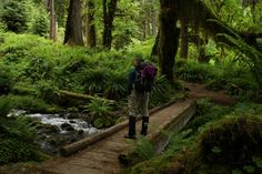 Hoh rain forest, Olympic National Park. Great trip with the kid around the Olympic Peninsula.