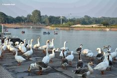 Birds of Sukhna Lake Chandigarh.