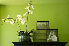 I will have a green wall/room in my house.