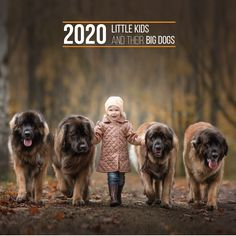 """Back for a third year, the """"Little Kids and Their Bog Dogs"""" calendar! Featuring the Leonberger, Great Dane (both black and Harlequin), Mastiff, Ca de Bou, Saint Bernard/St. Bernard, Newfoundland, Labrador Retriever, Irish Wolfhound, Doberman Pinscher, Gordon Setter, Greyhound and Ibiz.an Hound"""