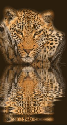 Animated Graphics, Animaged Gif, Animated Gifs, Water Reflections, Water Reflection, Animations, Keefers photo by Keefers_