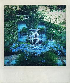 My own courtyard garden, Cape Town, by Pamela Strauss.