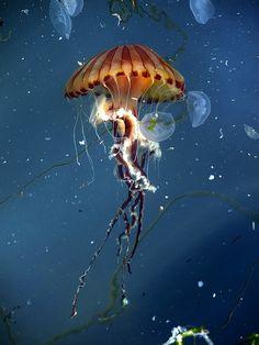 jelly by onur el