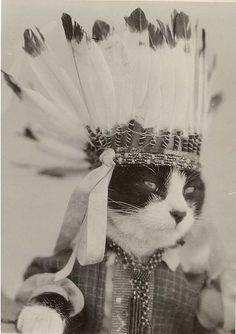 Big Chief Meow