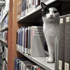 And when this cat started studying up after he got his very own library card. | 31 Times Cats Made The World A Better Place
