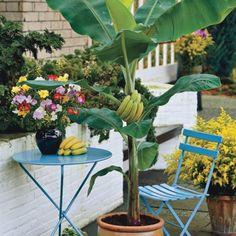 ravishing house plants care.  Bromelija egzoti na biljka Cvece i sobno bilje Pinterest Flora