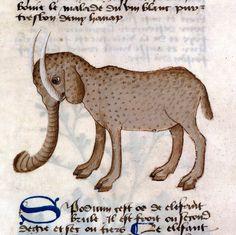 Elephant, 15thC
