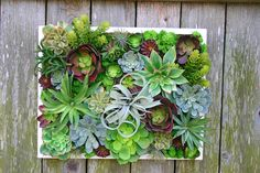 Faux Succulent Arrangements, Succulent Stems, Air Plant by TheQueenBeesGarden Succulent Wall, Succulent Arrangements, Faux Succulents, Picture Hangers, Echeveria, Air Plants, Planters, Planter Garden, Greenery