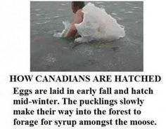 37 Of The Best Memes About Canada On The Internet Canadian Memes, Canadian Things, I Am Canadian, Canadian Humour, Meanwhile In Canada, Funny Jokes, Hilarious, Stupid Funny, It's Funny