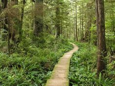It's an easy hike to reach this gorgeous place by Washington's coast!