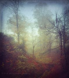Nov 13th. Autumn. Fall. Forest. Fog.