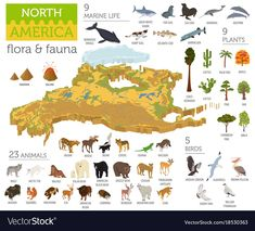Isometric North America flora and fauna map elements. Animals, birds and sea . Andean Condor, World Map Printable, Kids Around The World, Field Guide, Flora And Fauna, Animals For Kids, Marine Life, Pet Birds, Kids Learning