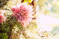 A #stunning shot of the #wild + #romantic #flowers in the #sunshine. ::Cindy + Eric's delightful, natural outdoor wedding at the Rio Villa Beach Resort in Monte Rio, California:: #dahlia #wildflowers #floralarrangements #sun #bright #light #beautiful