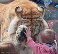 зоопарк и дети - Поиск в Google
