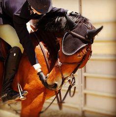 reward your horse for being good! www.thewarmbloodhorse.com