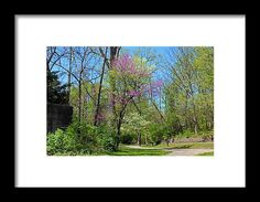 spring, red bud, tree, nature, path, side cut, park, landscape, maumee, ohio, michiale schneider photography