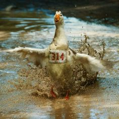 does the aflac duck have a name