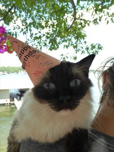 Happy 13th Birthday, Caymus!  http://www.floppycats.com/happy-13th-birthday-caymus.html