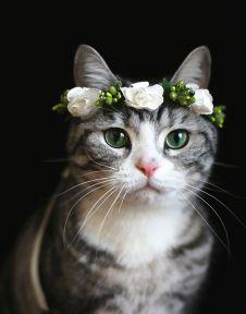 cat flower - Google 検索