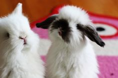 I'm a bunny girl, in a bunny world. baby bunny! I have to have them T^T They're so cute, it makes me cry.