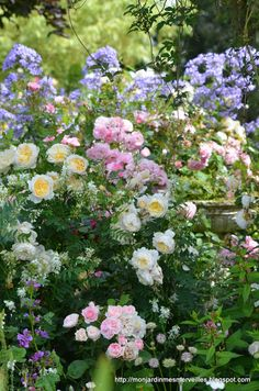 Lovely pastel combination of blue, pink, yellow.  It's hard to beat the beauty of roses...