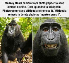 Monkeys Owns It