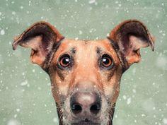 retratos-expressivos-de-cães-16