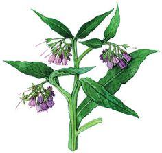 Heal Cavities, Nordic Interior, Medicinal Herbs, Health Advice, Kraut, Herb Garden, Bushcraft, Life Is Good, Detox