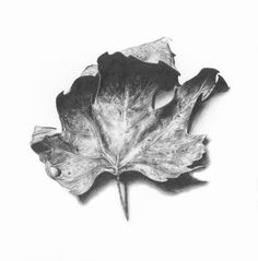 Leaf by Melinda Alice Kierre