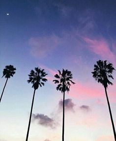 wallpapers for your phone - - Wattpad Wallpaper For Your Phone, Wallpaper Iphone Cute, Tumblr, City Of Angels, Look At The Stars, Pretty Wallpapers, Summer Vibes, Summer Days, Palm Trees