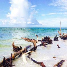 Love her but leave her wild, like the sea #driftwood #loveher #staysalty #saltair #sandytoes #islandgirl #wildchild #paradise #cayocosta #islandlife #beachy #beachbum #mermaid #waves #saltwater #bocagrande #sanibel #sanibelstar #captivaisland #swfl #sanibelisland #captiva #ftmyers #beachlover