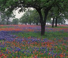 Texas Hill Country | Texas Scenic Drives on myscenicdrives.com (from Austin 6+hrs.)