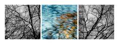 // As árvores unidas jamais serão vencidas  [The trees united will never be defeated]  // Composition (23 January 2012) // Lisbon, Portugal // 16 January 2012  // 100x100cm x3 // Inkjet print (Epson UltraChrome K3 pigmented ink on Hahnemuhle Photo Rag paper) // Edition of 3 + 1AP    // José De Almeida photography  // http://www.josedealmeida.com/