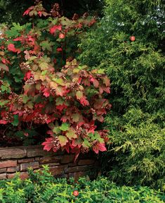 Autumn's Subtle Charms: As the season winds down, these combos prove that it's the understated details that matter most. Read the full article here http://www.finegardening.com/plants/articles/autumns-subtle-charms.aspx#