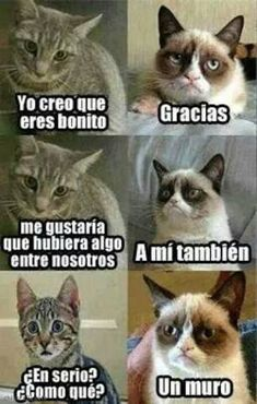 Resultado de imagen para memes de gatos