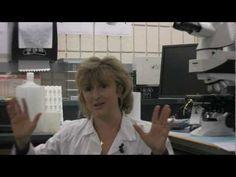 Dr. Eva Sapi - Bacterial Biofilms and Lyme Disease